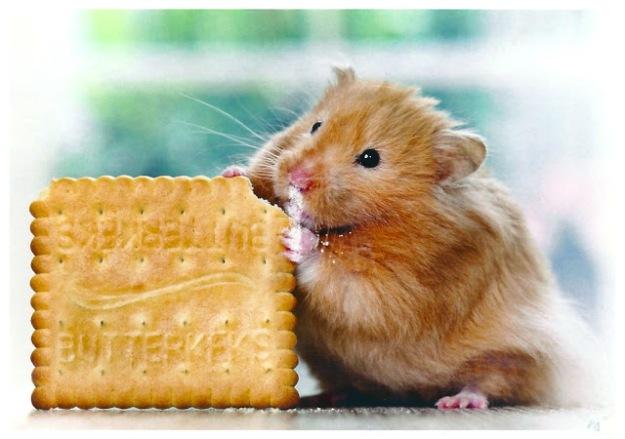http://myfavoriteanimalpostcards.blogspot.com/2012/07/nage-tier-rodent-gerbil-or-hampster.html